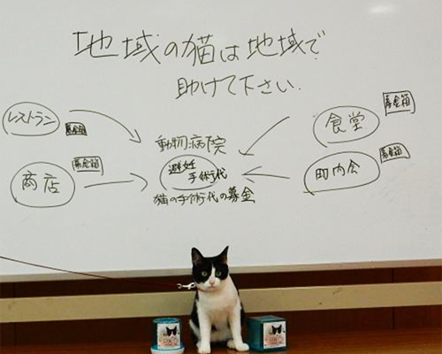 猫ジャンヌのセミナー 「地域の野良猫の避妊去勢手術代捻出方法案」
