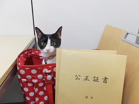 弊団体の名誉総裁猫ジャンヌダルクは、公正証書という公の書類によって飼い主による養子縁組をし、人間の子になりました。